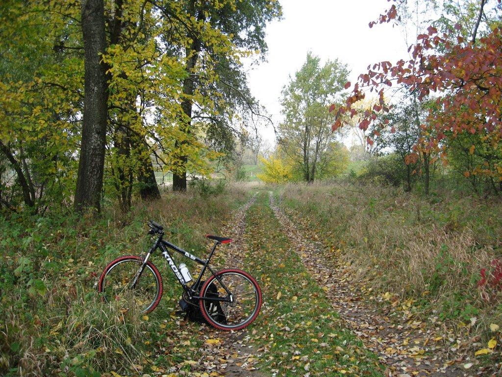 Okoliczne lasy wyglądają najpiękniej jesienią.